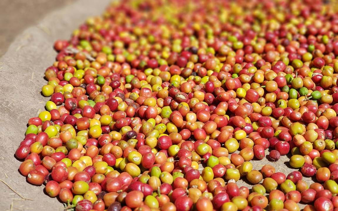 Coffee Processing: What Is Carbonic Maceration?