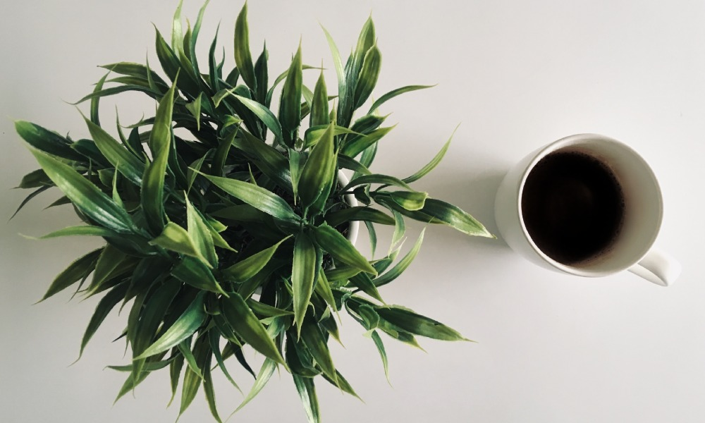 Carbon neutral by 2030: Is it a realistic goal for coffee businesses?